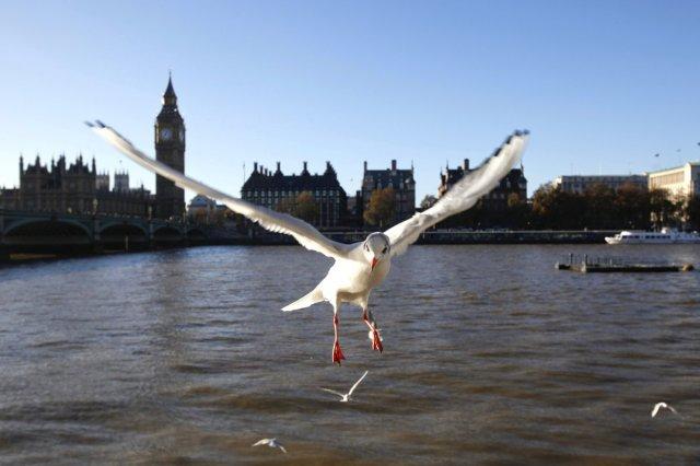 seagull inland